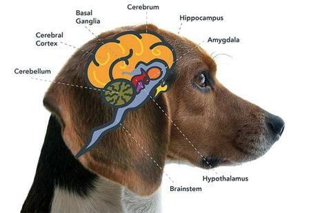 chilliwack creating brighter days harmony cbd dog treats 90mg & 180mg